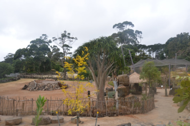 Pridelands style zoo enclosure with natural wooden barriers, rocks and exotic foliage